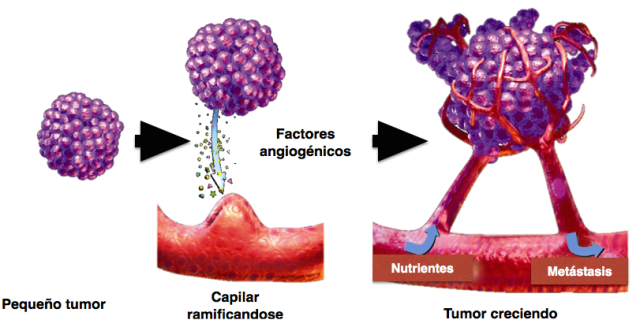Pasos seguidos por el tumor para hacerse con los servicios de los vasos sanguíneos. Figura retocada de  Siemann DW., Vascular targeting agents. Horizons in Cancer Therapeutics: From Bench to Bedside. 2002;3(2):4-15