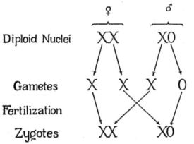 critique_of_the_theory_of_evolution_fig_060